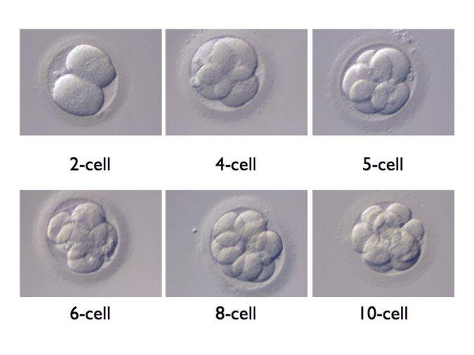 multicellular.jpg